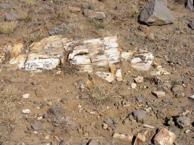 Petrified wood on a ridge above Cache Creek