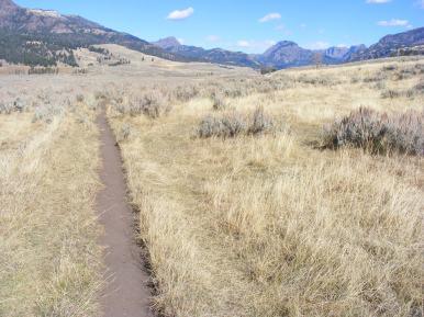 The Lamar River Trail near Soda Butte Creek