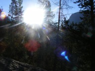 Looking into the sun through the forest along the upper Green River