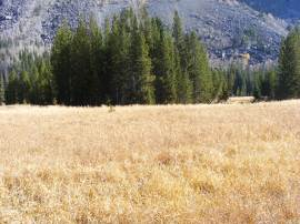 Golden grasses in Three Forks Park