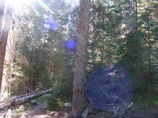 Forest adjacent to Three Forks Park