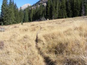 The Highline Trail passes through numerous golden meadows