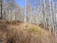 Draco and Leah in a typical aspen forest near the Beaver Ponds