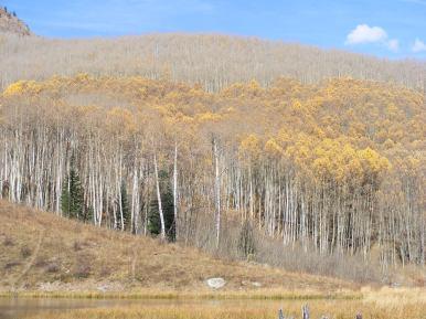 Aspen forest adjacent to the Beaver Ponds