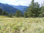 Ponderosa pine along Crystal Lake Trail