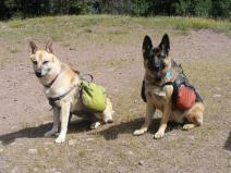 Just setting off, Draco and Leah ready to go - Good dogs! for sitting and staying on command