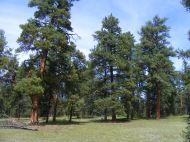 Ponderosa Park above Elk Creek