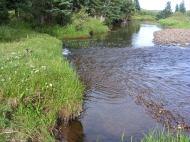Elk Creek near camp