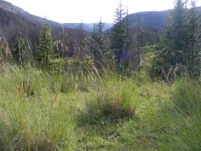 Near Third Meadows