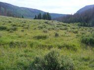 Third Meadows in Elk Creek
