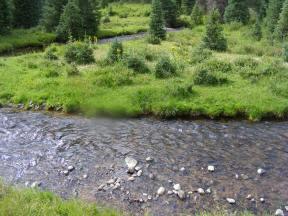 Elk Creek in Third Meadows, notice the healthy conifer saplings