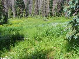 An opening in the heavy forest above Elk Creek