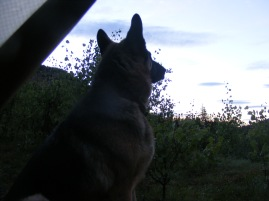 Leah silhouetted against the dawn's early light