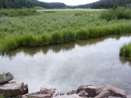 Elk Creek, placid near the outlet to Second Meadows