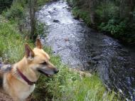 Draco on the bank of Elk Creek