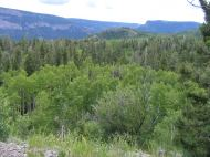 Mixed aspen-conifer forest on the Valle Victoria Trail; Canyon containing the Conejos River in the background