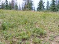 Eleven thousand foot grassland in the South San Juan Wilderness