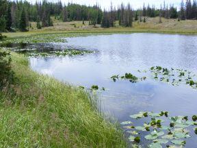 Pond on mesa near the Valle Victoria Trail