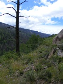 Snag on the Notch Trail overlooking Elk Creek