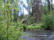 Elk Creek near the Notch Trail