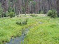 Spring fed tributary to Elk Creek
