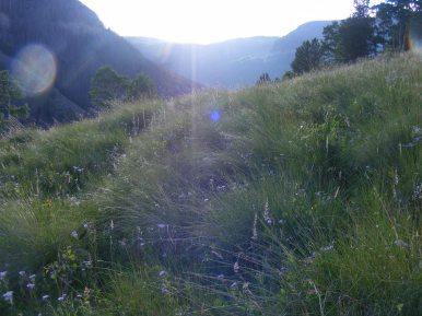 Looking towards Third Meadows