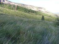 Hillside below the mesa on the north side of Elk Creek
