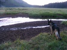 Leah on the bank of Elk Creek in Second Meadows