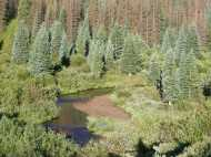 Elk Creek, some live trees among the beetle kill