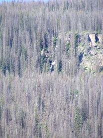 Rito Colorado barely visible as a white froth in the beetle killed forest adjacent to Second Meadows