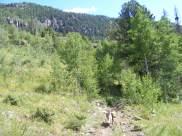 Draco on Elk Creek Trail