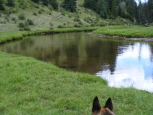 Leah looking at the Canadian geese in First Meadows