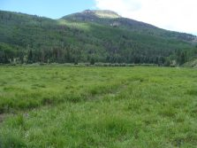 Aspen forest above First Meadows