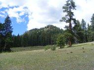 Short grass meadow adjacent to Elk Creek
