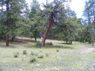Elk Creek Trail through the ponderosa park