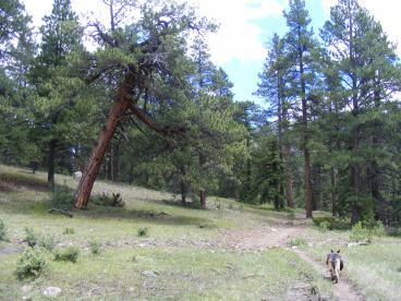 Leah on the Elk Creek Trail in the ponderosa park near the trailhead