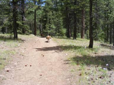 Draco on the Elk Creek Trail