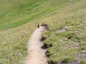 A marmot in Silver Creek