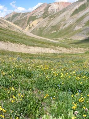 Silver Creek, wildflowers in the alpine life zone