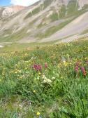 Multi-hued wildflowers in Silver Creek