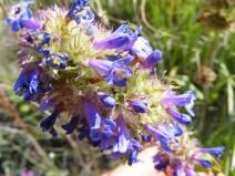 Purple mystery flower found near North Clear Creek Falls