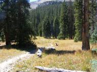 Horn Fork Trail in the Collegiate Peaks Wilderness