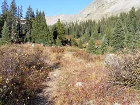 The Texas Creek Trail just below Browns Pass Trail