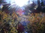 Willowy sunburst on Texas Creek
