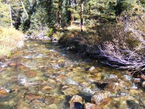 Texas Creek, a clear mountain stream in the Sawatch Range