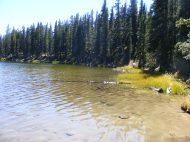 The lower Waterdog Lake shore line