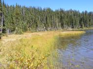 Marsh lake shore of the lower Waterdog Lake
