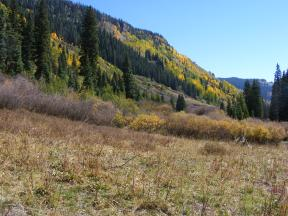 Dark green, yellow and deep blue - must be Autumn in the Rocky Mountains