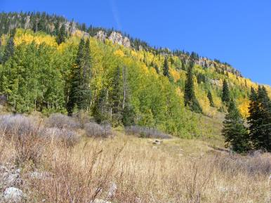 Multi-hued aspen on the slopes above Poverty Gulch