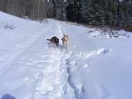 Draco and Leah on the Gold Creek ski trail, nee Gunnison National Forest Road 771